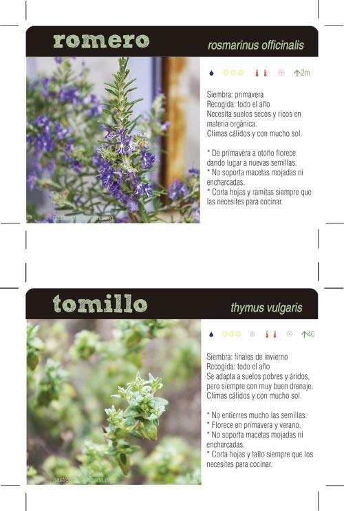 Fichas de plantas aromáticas II: romero y tomillo