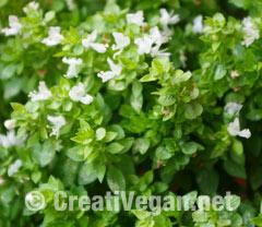 Albahaca de hoja pequeña en flor