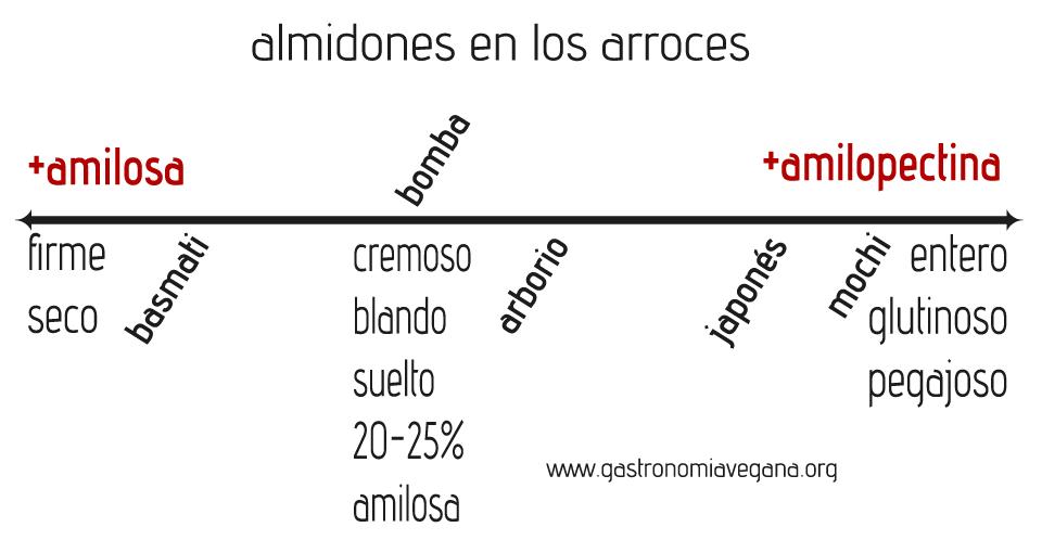 Almidones en los arroces más comunes