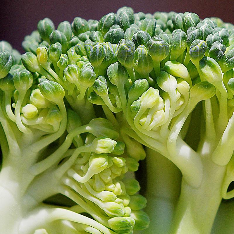 c mo cocinar con br coli gastronom a vegana