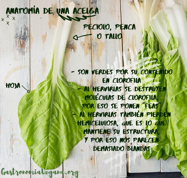 Anatomía de una acelga - tutorial Cómo cocinar con acelgas - gastronomiavegana.org